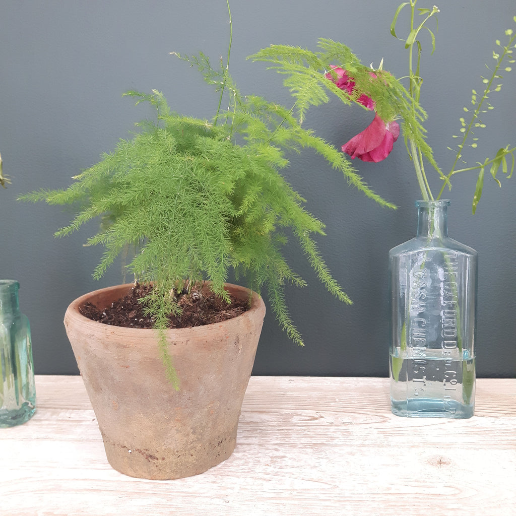 How to care for your houseplants: Let's talk about ferns ... Rabit Ferns As Houseplants on