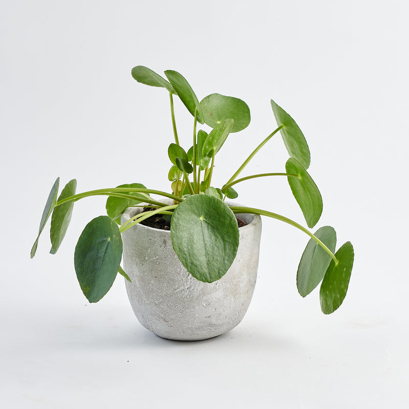 Concrete Plant Pot Small