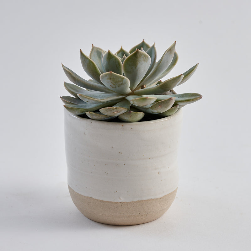 Large Hand Thrown Plant Pot
