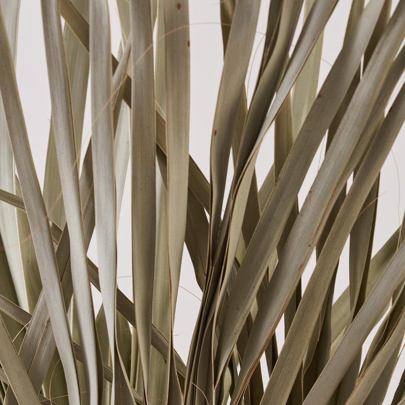 Wild Palm Leaves dried bunch