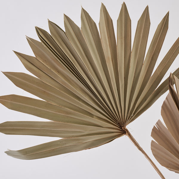 Palm leaves dried bunch