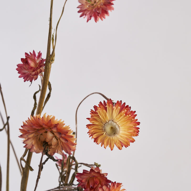 Straw flowers coral dried bunch