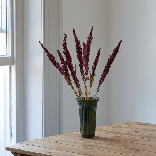 Amaranthus dried bunch