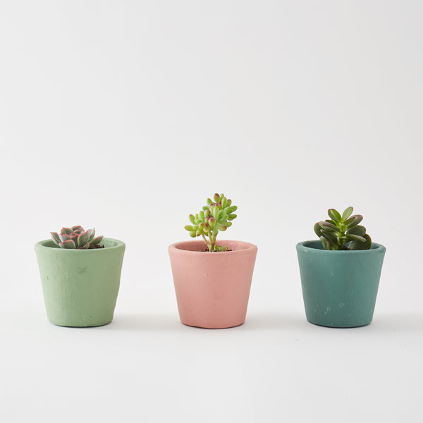 Set of 3 Small Succulents