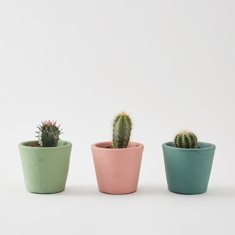 Set of 3 Small Cacti