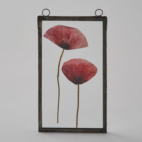 Pressed Poppy Glass Frame Picture  –  (2 options available)