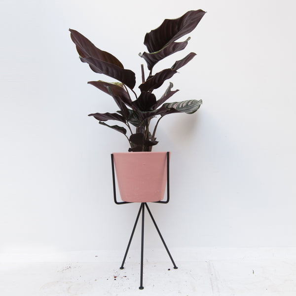 Plant Stand - Three legs