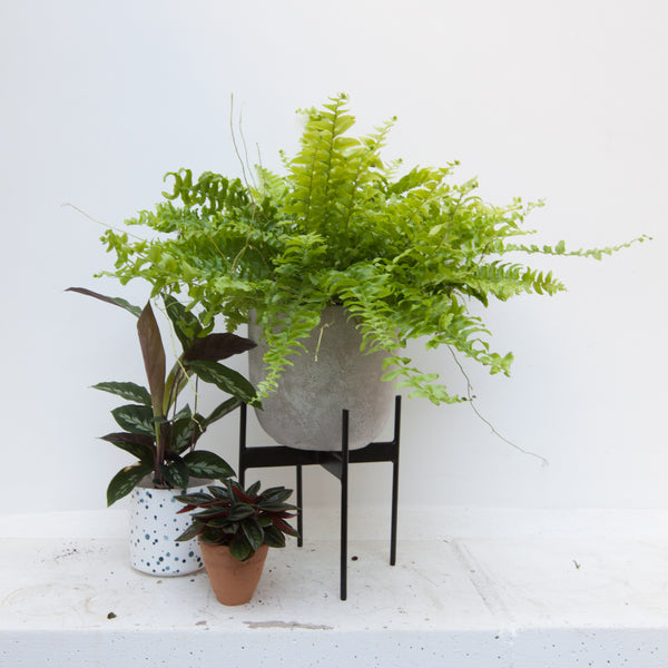 Plant Stand - Four legs