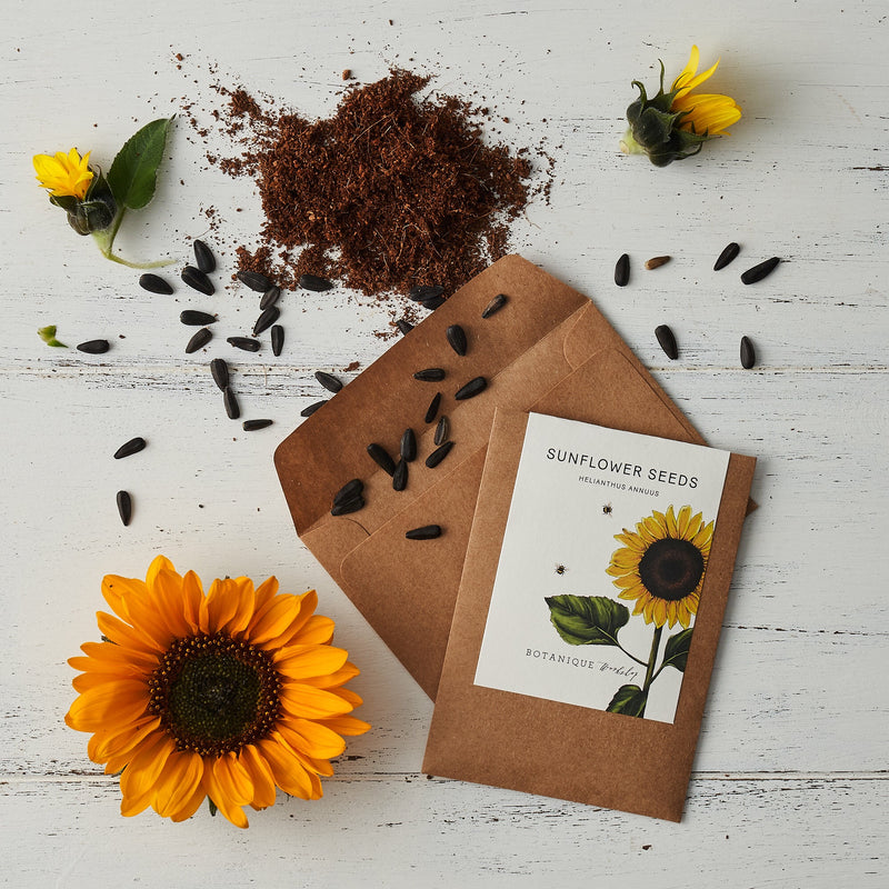 In Bloom Flower Seed Set - Wildflower Meadow, Forget-Me-Not, Sunflower, Sweet Pea