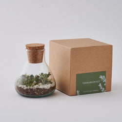Terrarium Making Kit with plants
