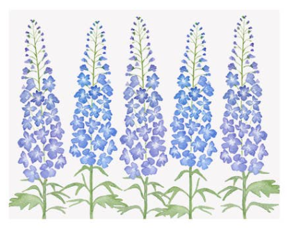 Delphinium Single Card