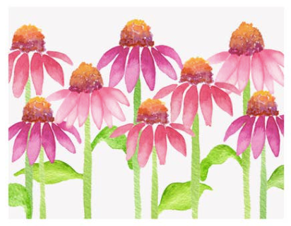 Coneflower Single Card
