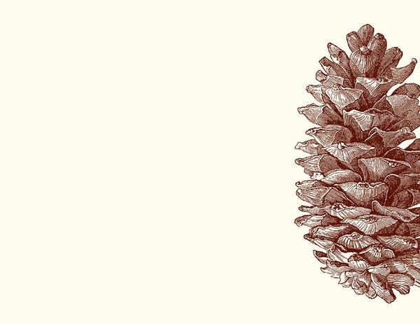 Pinecone Notecards