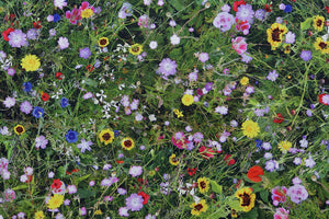 Wildflower Meadow Fabric - Pinks, Purples, Blues and Yellows