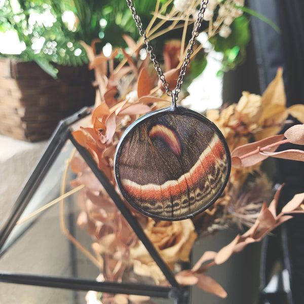 Cecropia Moth Window Pendant