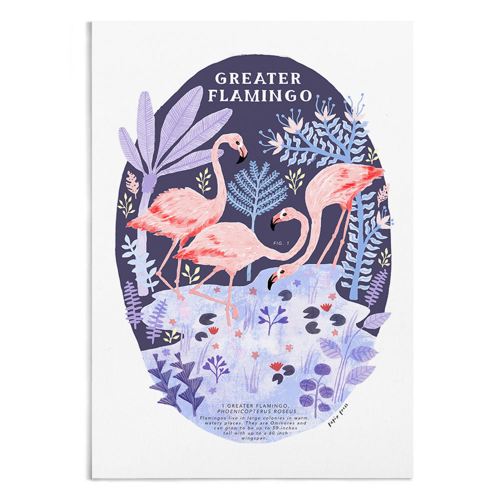 Natural History Flamingo - A4 / A3 Artists Print