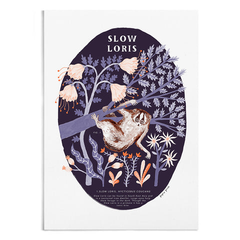 Natural History Slow Loris - A4 / A3 Artists Print - Papio Press