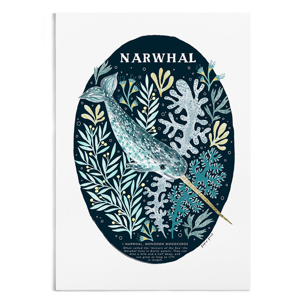 A natural history painting of a Narwhal in the ocean.