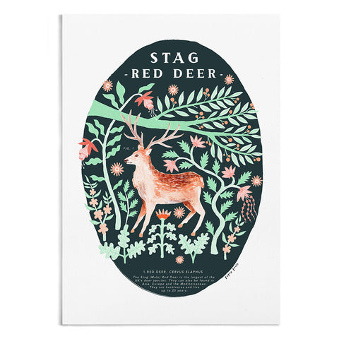 Natural History Stag - A4 / A3 Artists Print - Papio Press