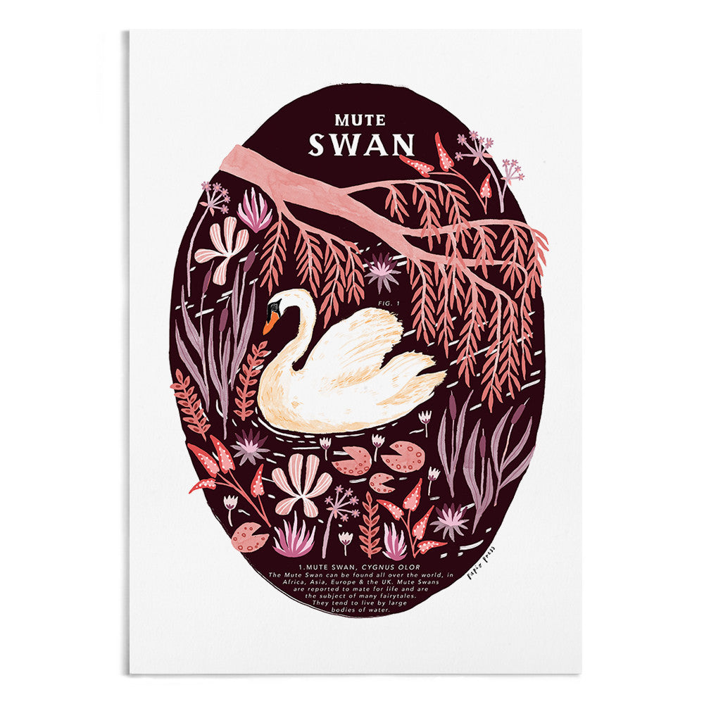 Natural History Mute Swan - A4 / A3 Artists Print - Papio Press