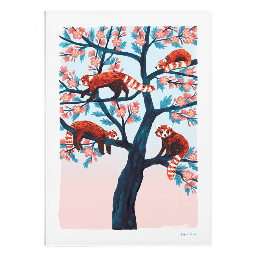 A watercolour painting of 4 red pandas in a tree.