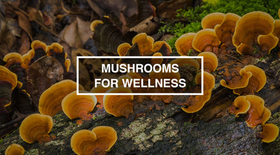 Mushrooms for Wellness