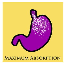illustration of stomach that says maximum absorption underneath