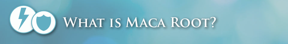 What is maca root banner