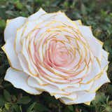 Giant blush paper rose with gold tips