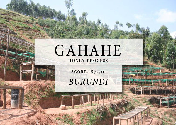gahahe honey process - BURUNDI