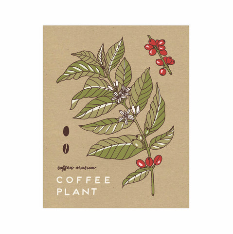 Coffee Plant 11x14 Botanical Print