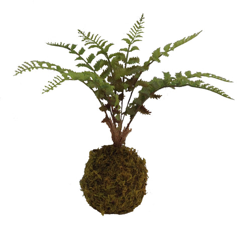 Moss Ball Ferns Boston and Palm: Set of 2