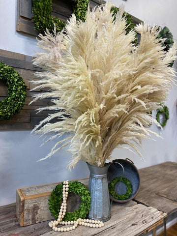 Pampas Grass - Natural - 6 Stem Bunch