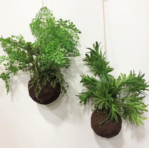 Kokedama Maidenhair and Fern-Set of 2