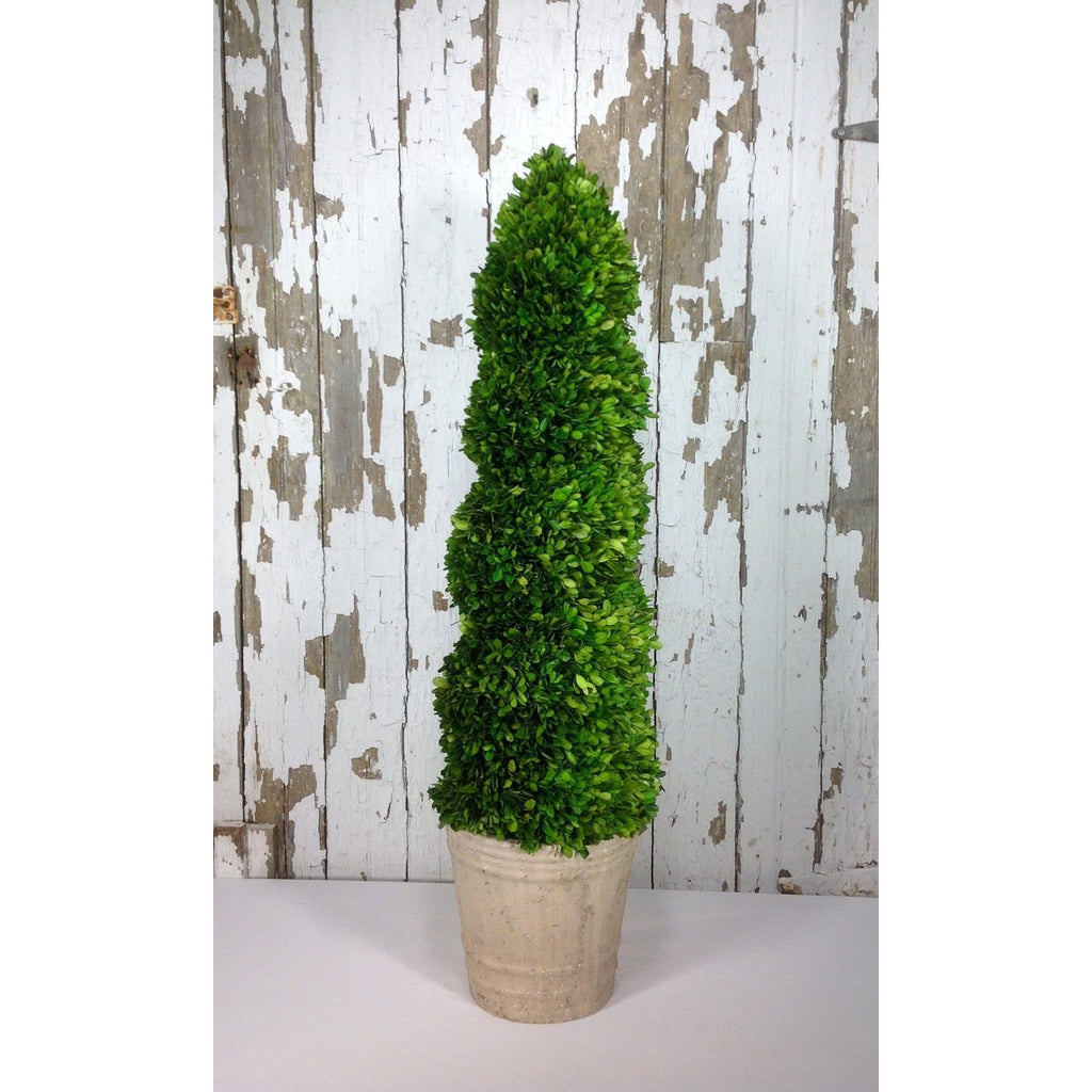 Preserved Boxwood Spiral Topiary - 43 Inch