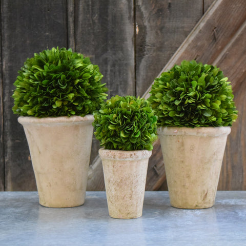 Preserved Boxwood Balls Potted - Set of 3 pieces