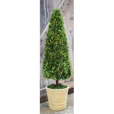 Preserved Boxwood Cone Topiary - 43 Inch
