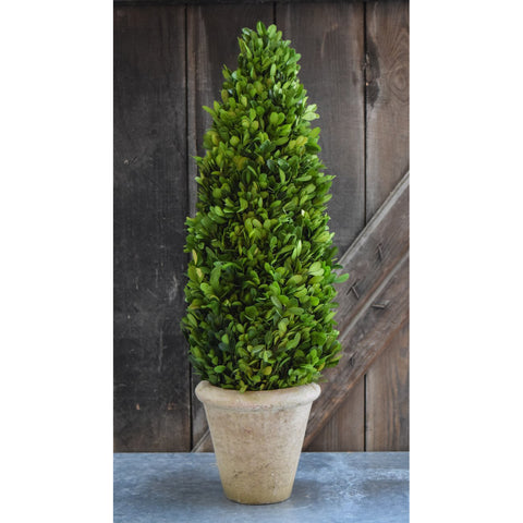 Preserved Boxwood Cone Topiary - 24 Inch