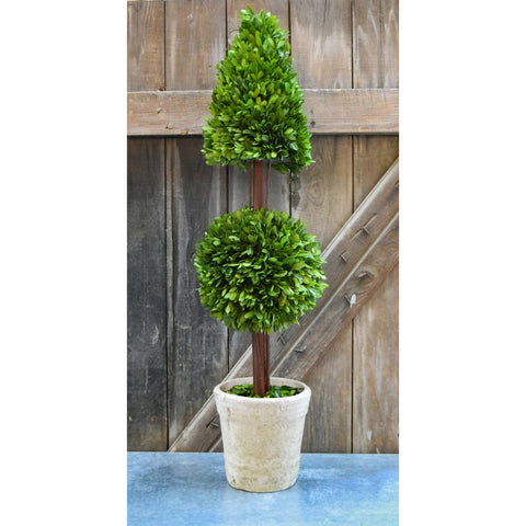 Preserved Boxwood Mixed Topiary - 36 Inch
