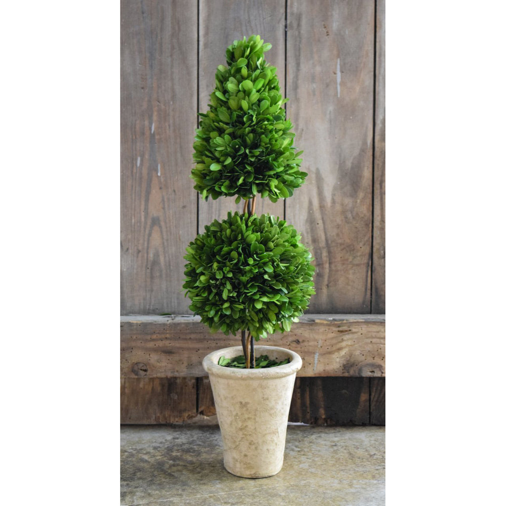 Preserved Boxwood Mixed Topiary - 24 Inch - Bella Marie