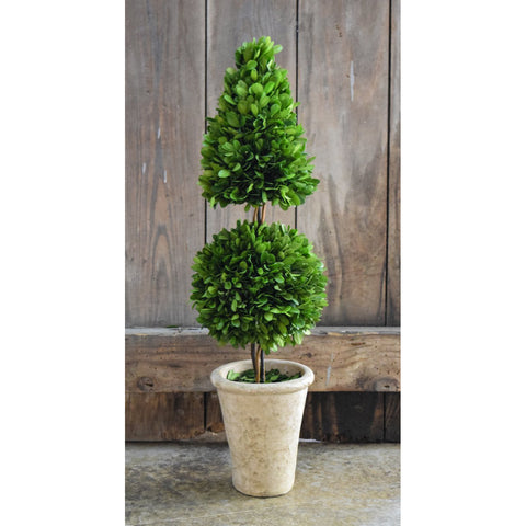Preserved Boxwood Mixed Topiary - 24 Inch