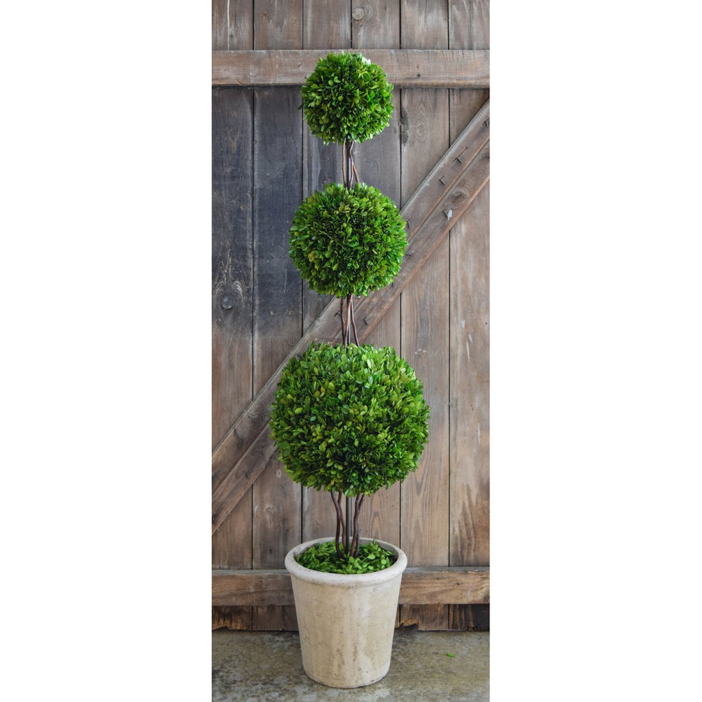 Preserved Boxwood Triple Ball Topiary - 59 Inch - Bella Marie