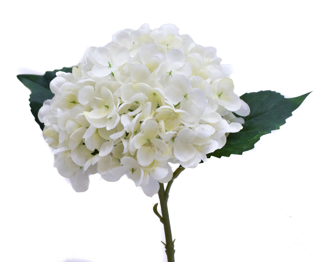 Hydrangea Stems - White - 3 Stem Bunch