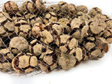 Pine Cone Cypress - Natural - 2.2 lbs