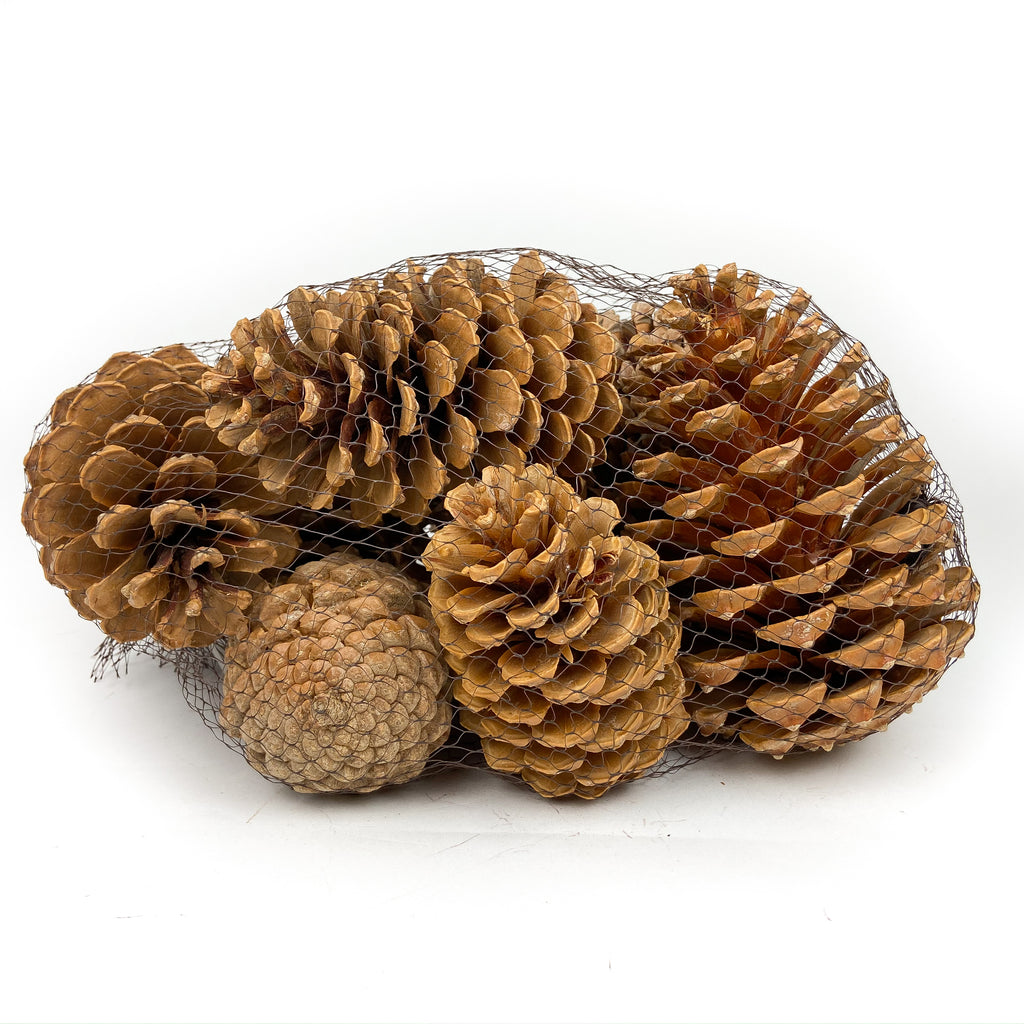 Pine Cone Martima - Bleached - 12 Pieces