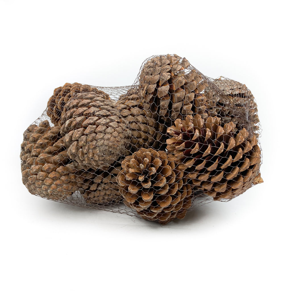 Pine Cone Martima - Natural - 12 Pieces