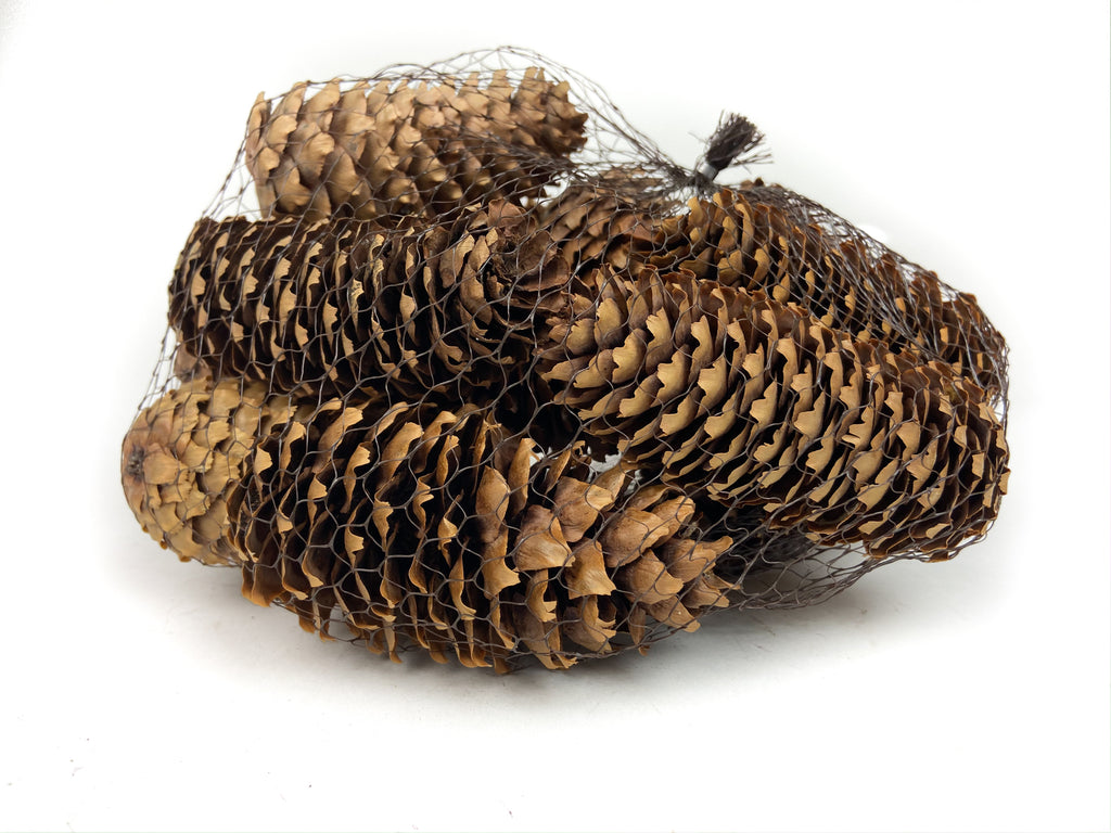 Pine Cone Natural - Spruce - 24 Pieces