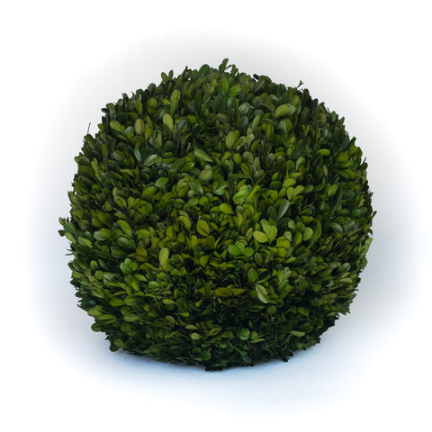 Preserved Boxwood Ball - 16 Inch