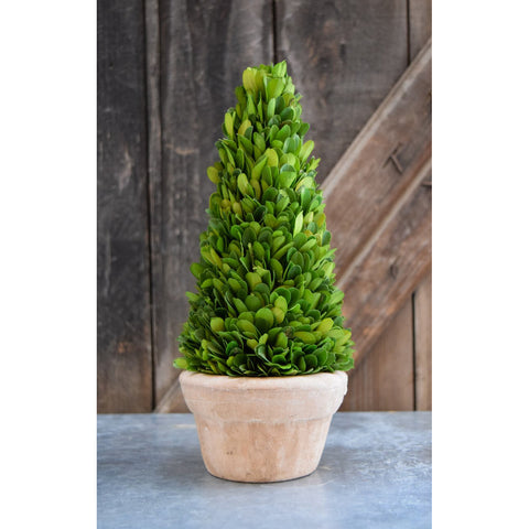 Preserved Boxwood Cone Topiary - 11 Inch