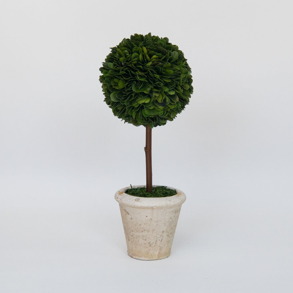 Preserved Boxwood Single Ball Topiary - 12 Inch - Bella Marie